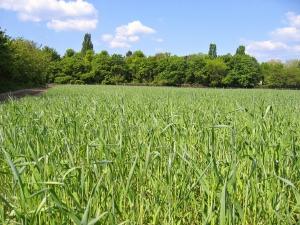 Alberta's AgriInvest Program